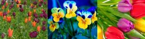 beautiful-garden (7)