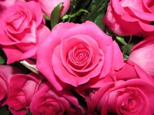 rosetopaz