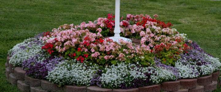 Цветочные композиции в саду