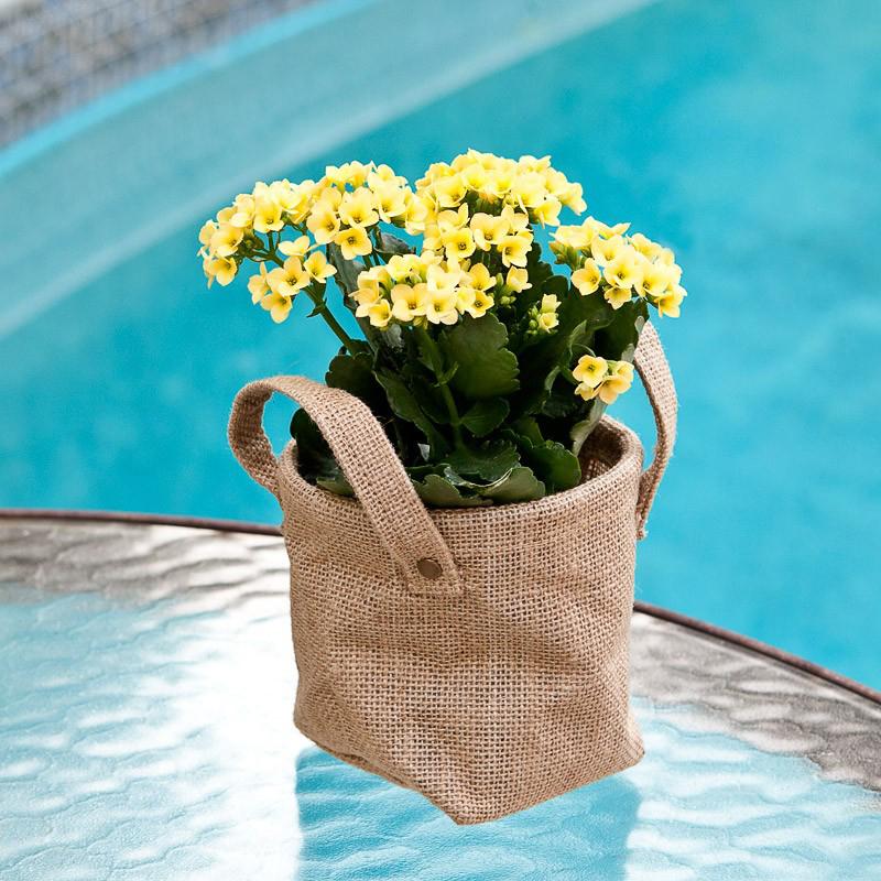 Самые популярные горшечные цветы для подарка