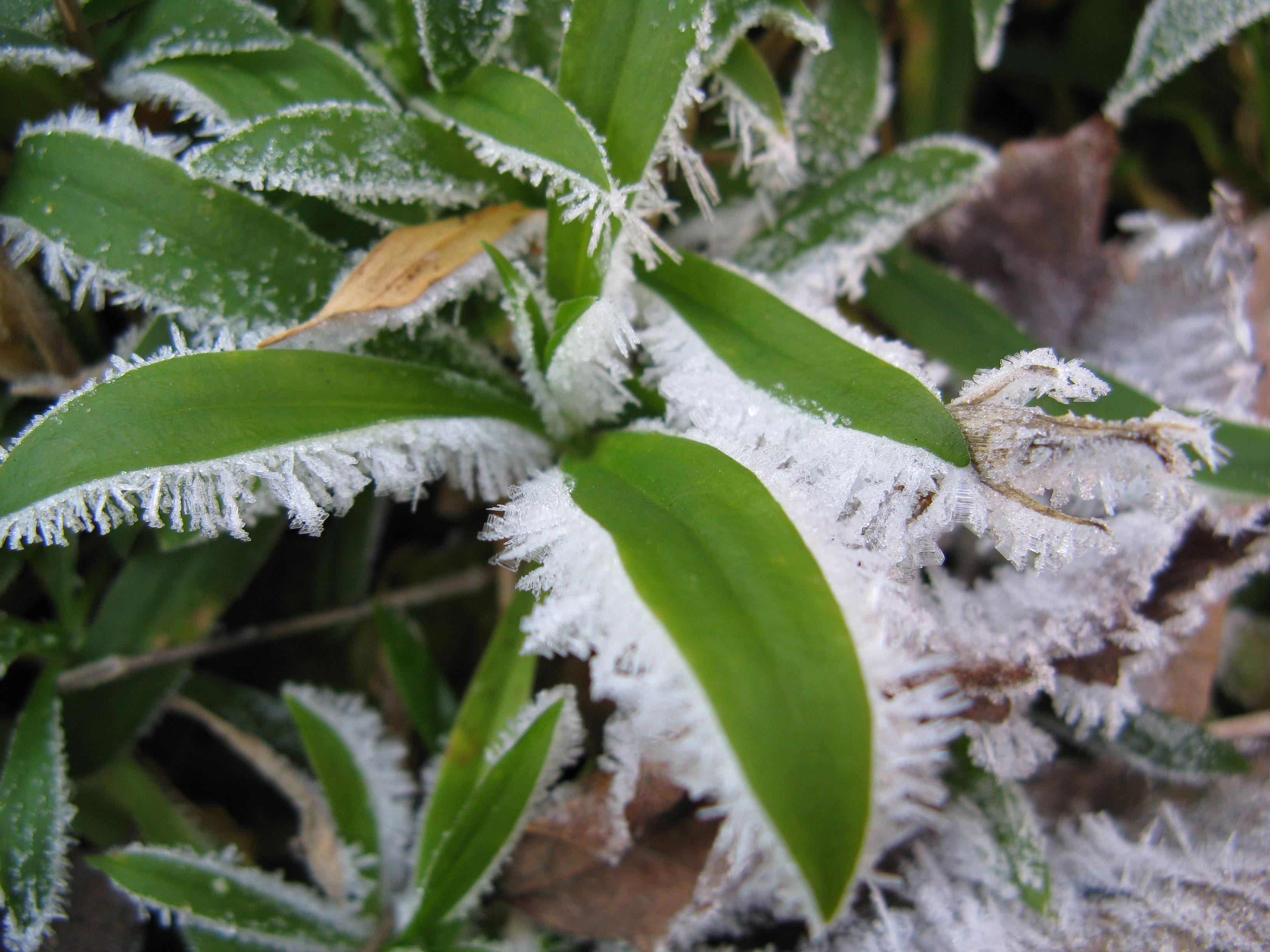 Криопротектор для растений