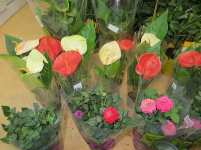 Поставка куркумы, каменной розы и других растений
