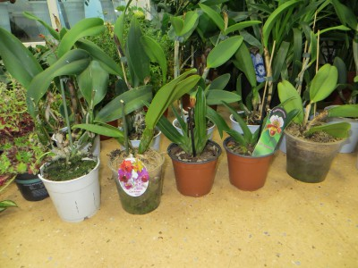 Орхидеи микс