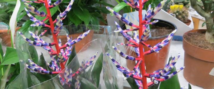 Поставка экзотических растений