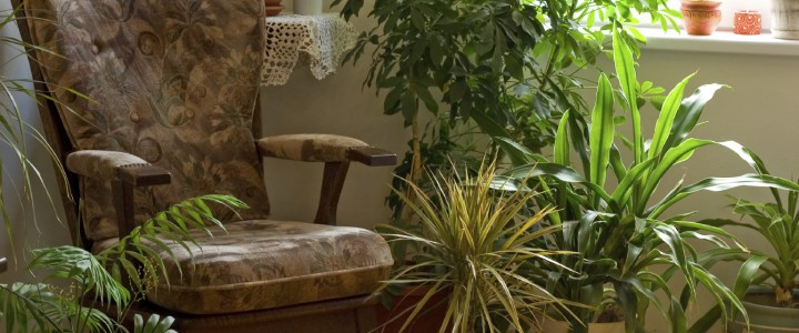 Как украсить интерьер комнатными растениями