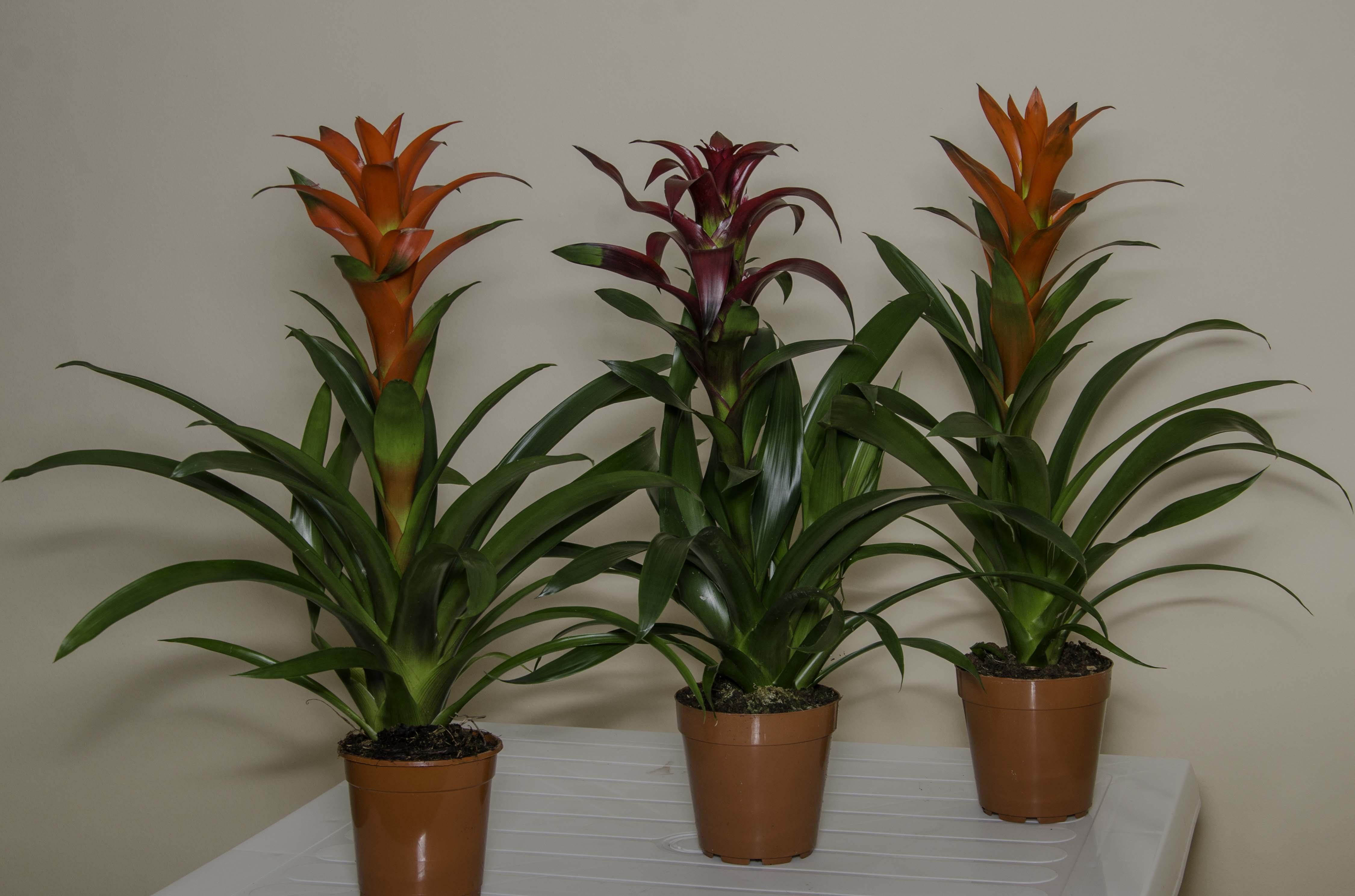 Поставка декоративно-лиственных и цветущих горшечных растений