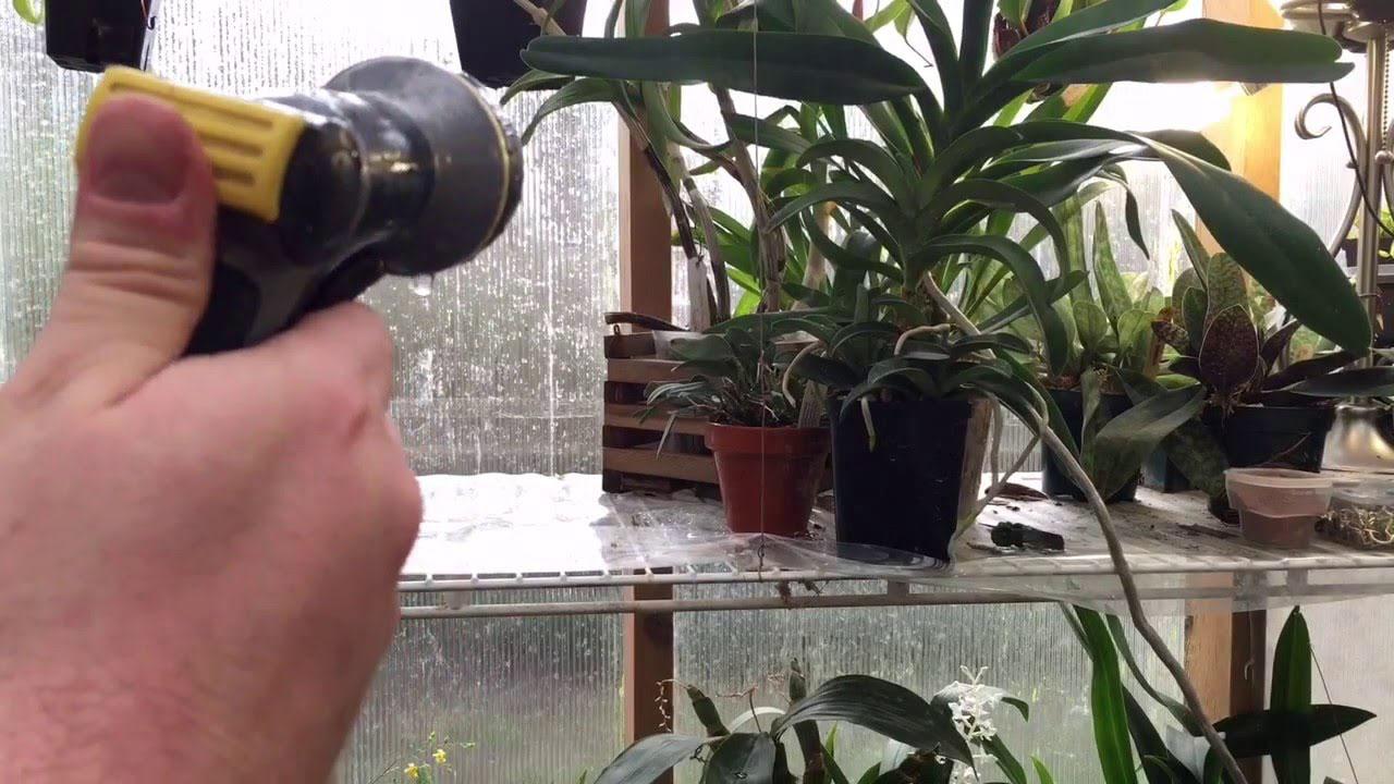 Как часто поливать растения зимой