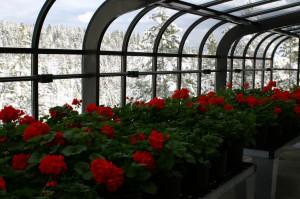 зимний сад3