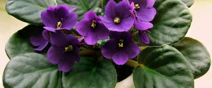 Коротко о домашних растениях