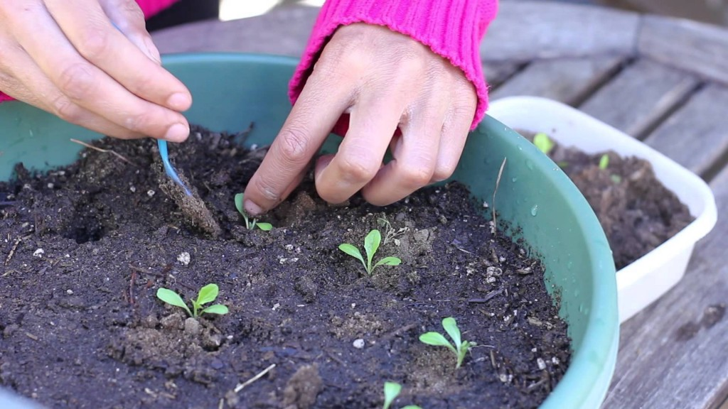 Весенний уход за растениями