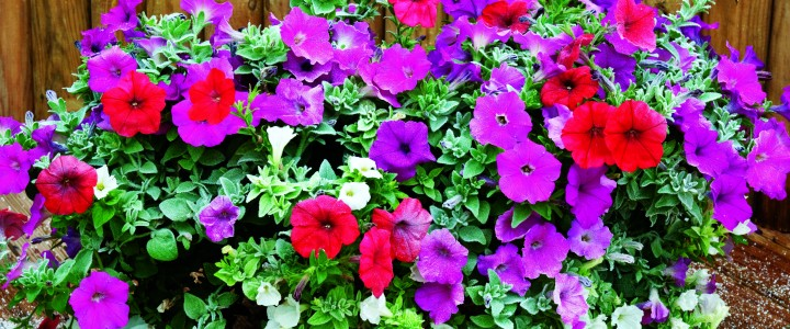 Растения для защиты сада и огорода