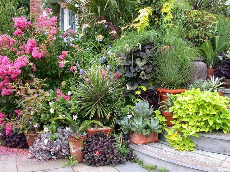 Растения в контейнерах для сада