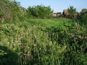 zabroshennyi-ogorod