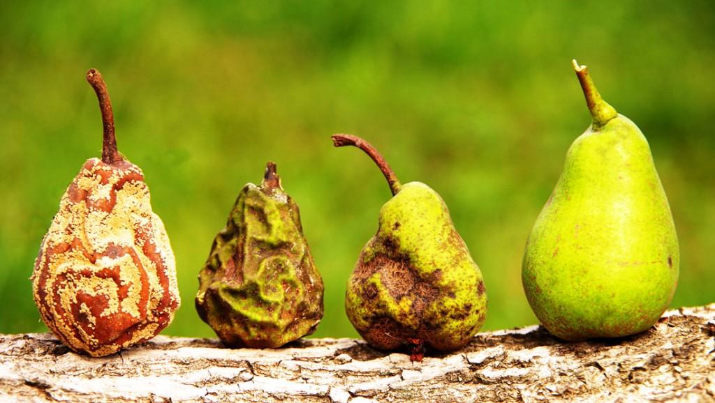 Симптомы болезни растений