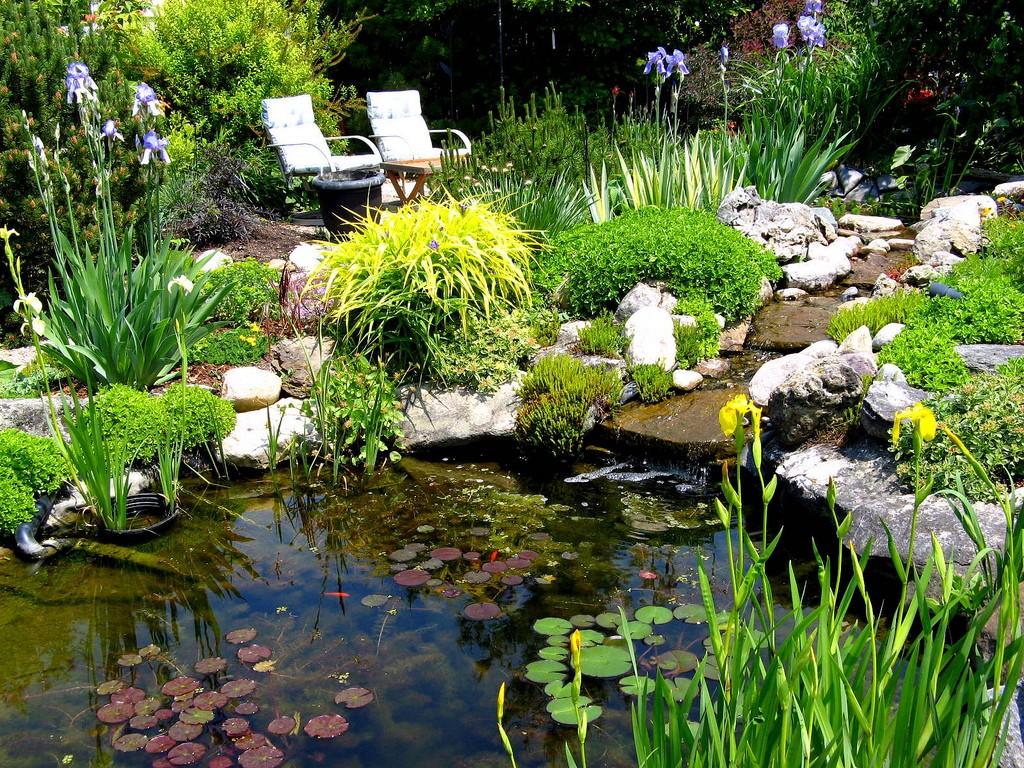 Растения для декоративного водоема