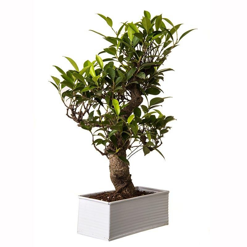 Как комнатные растения пришли в наш дом?