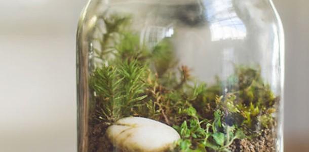 Экосистема в бутылке