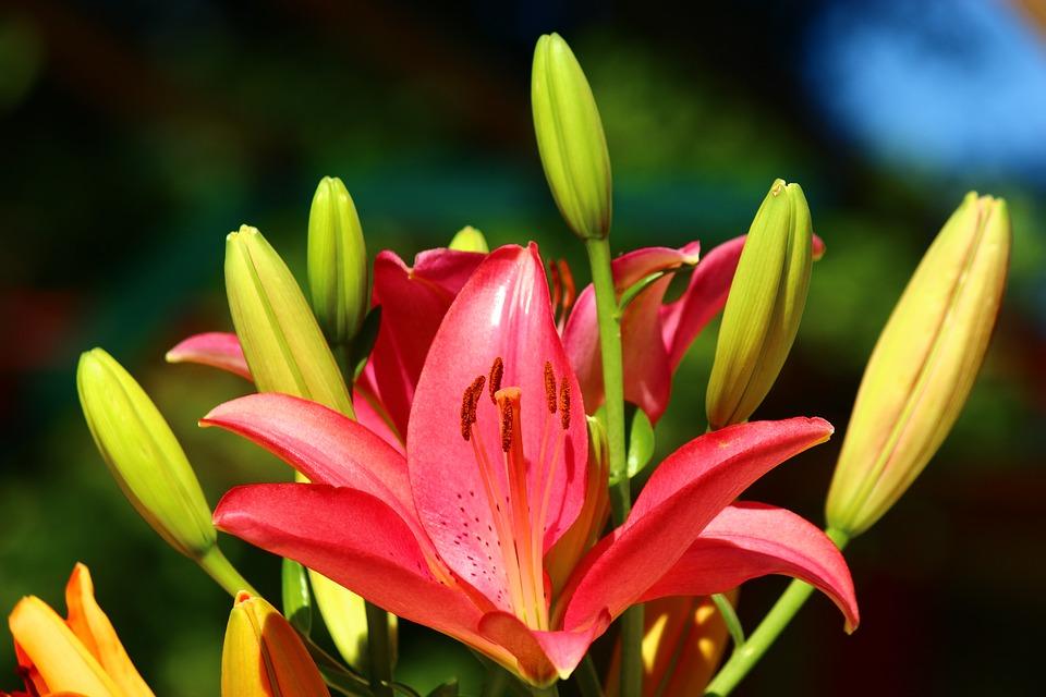 Не розой единой: 9 видов цветов для школьного букета