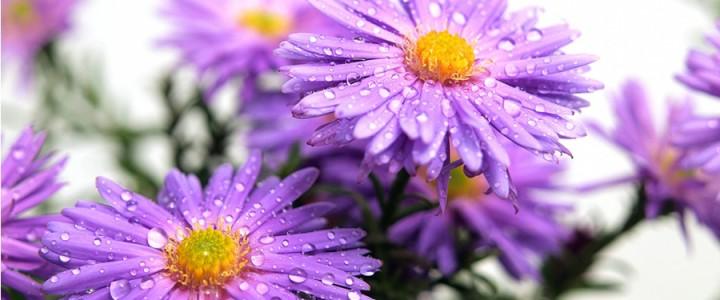 Немного о языке цветов