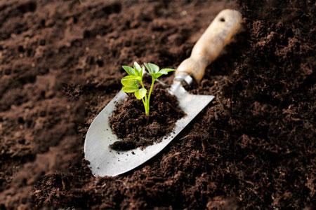 Хронология весенние работ в саду