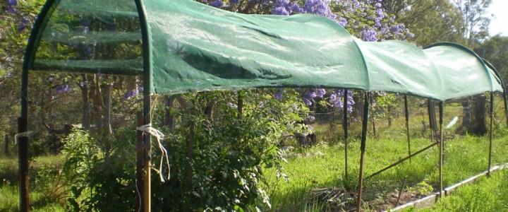 Защита растений от летнего солнца