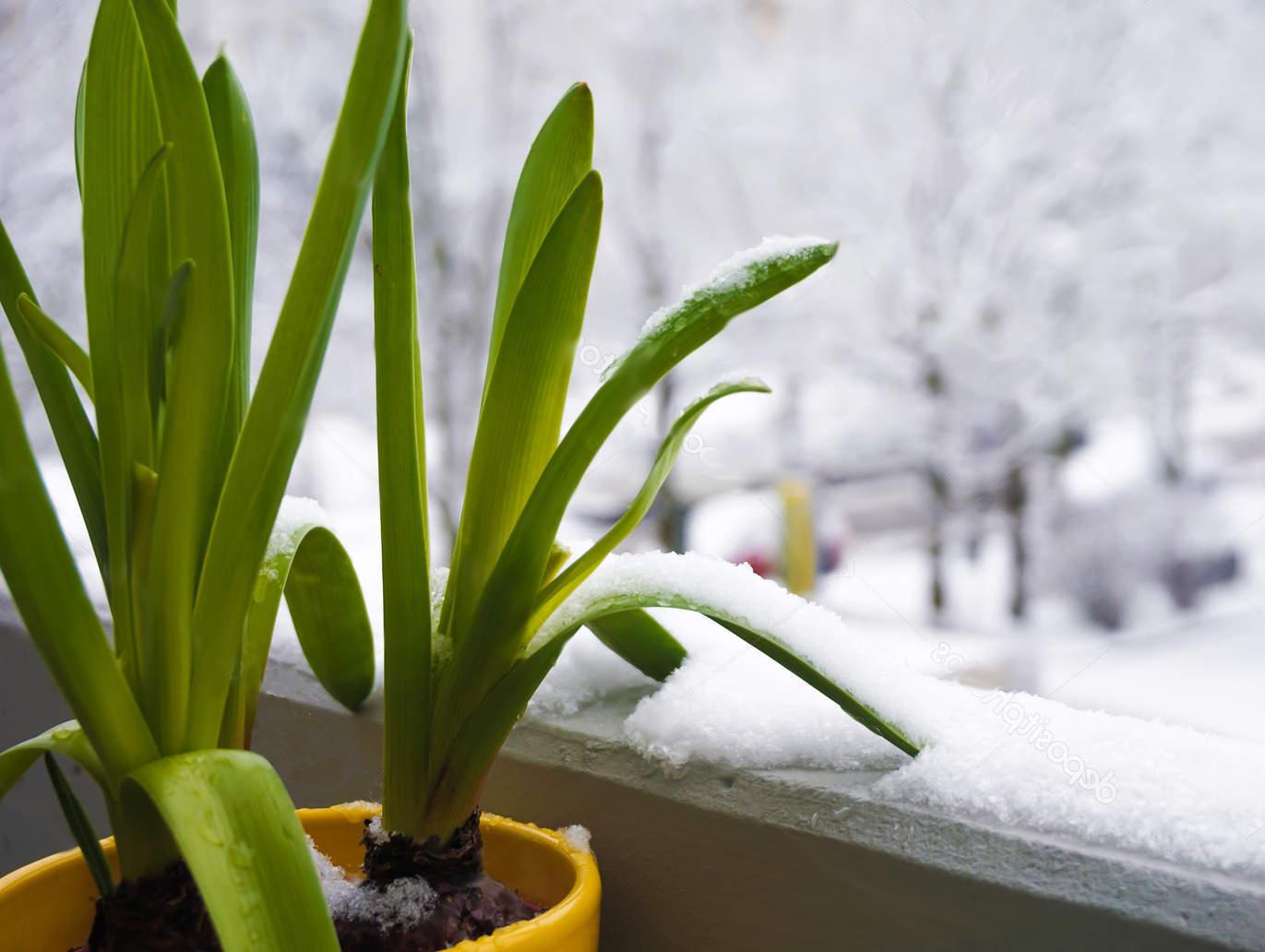 Как помочь комнатным растениям пережить зиму