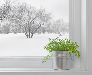 rastenia-zimoj