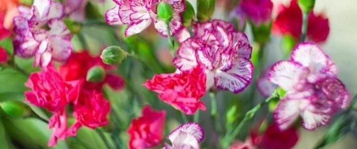 Какие однолетние цветы можно сохранить дома зимой