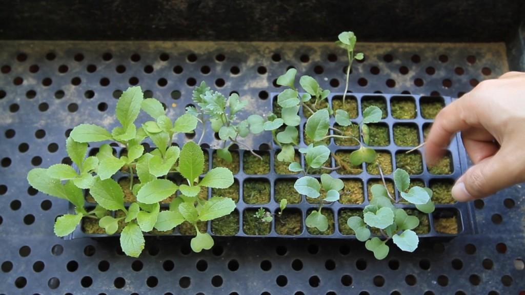 8 ошибок при выращивании рассады