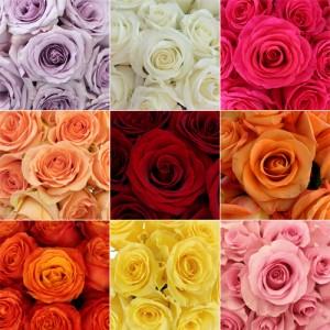 assorti-roz