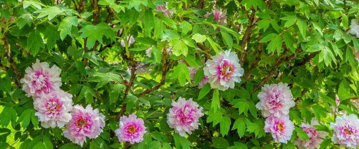 5 растений для глинистой почвы